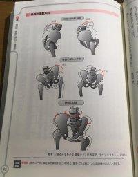 骨盤の運動方向