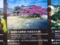 鍋島邸の緋寒桜(観光案内板)