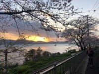 大村湾と朝日と桜
