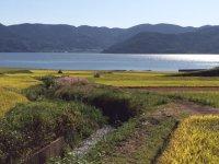 大村湾に注ぐ水路と水田風景