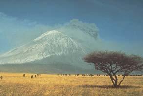 タンザニアのサバンナ